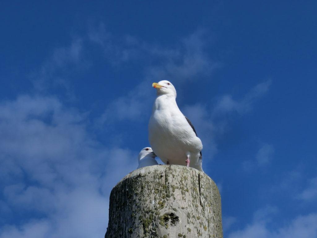 納沙布岬の鳥