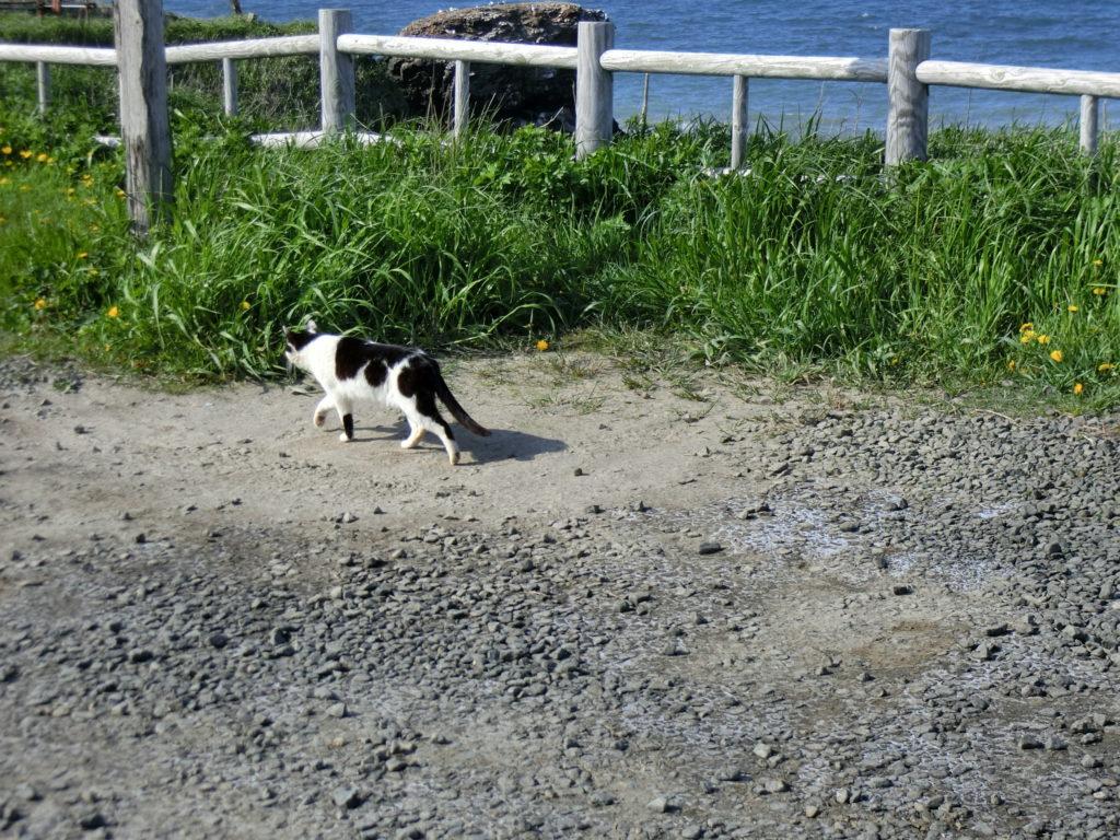 納沙布岬の猫