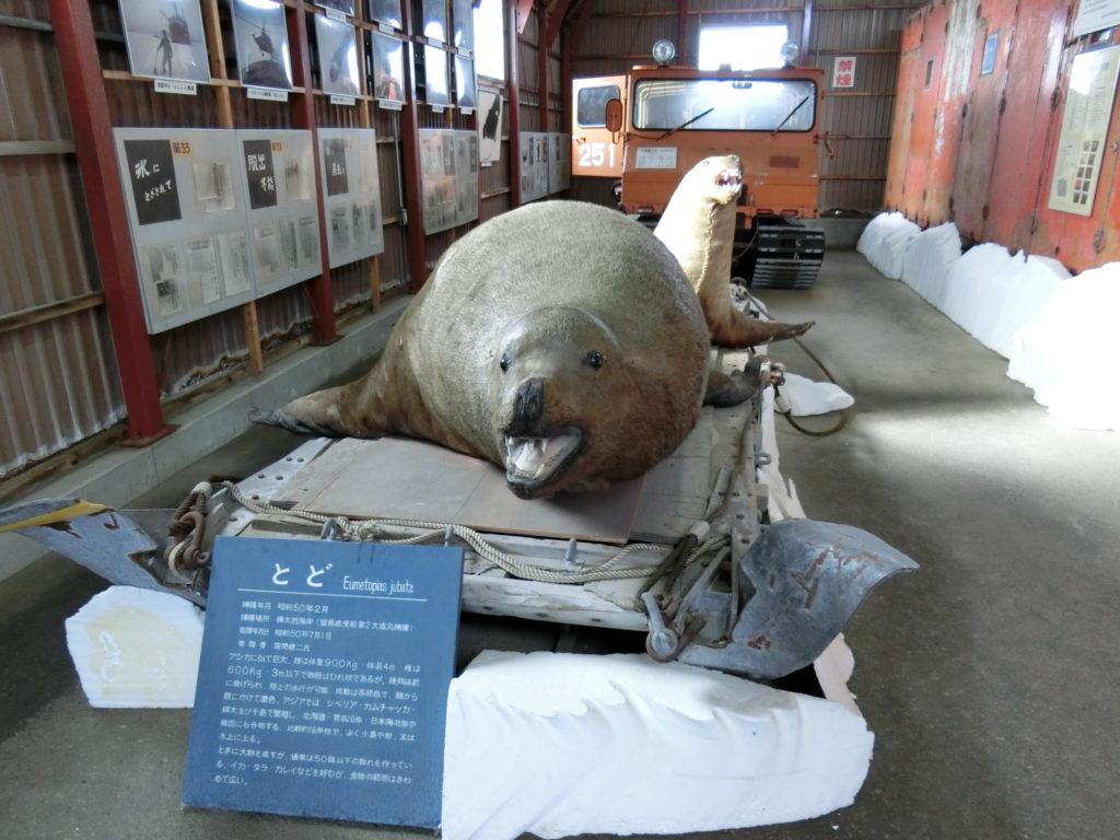 稚内市青少年科学館(南極越冬隊資料展示館)