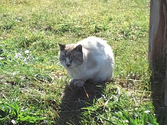旧手宮線跡遊歩道(未整備区間)にいたネコ